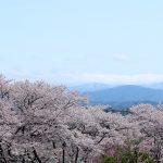 一眼レフで撮った桜を集めた作品「桜」