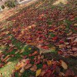 秋の色が美しくてたくさん写真を撮った朝の散歩道